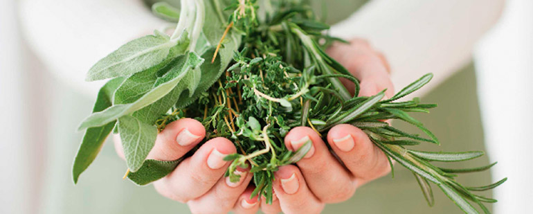 Лечение кисты печени народными средствами – самые эффективные методы
