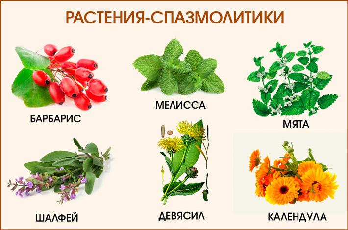 Растения-спазмалитики