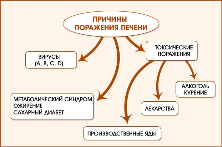 Факторы поражения печени