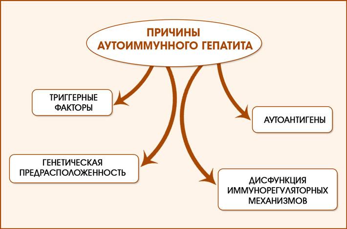 Факторы развития аутоиммунного гепатита