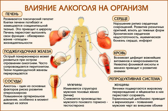 Алкоголь и организм человека