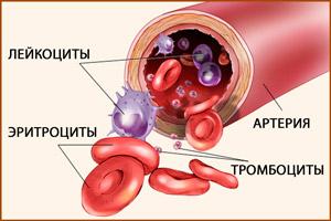 Части крови