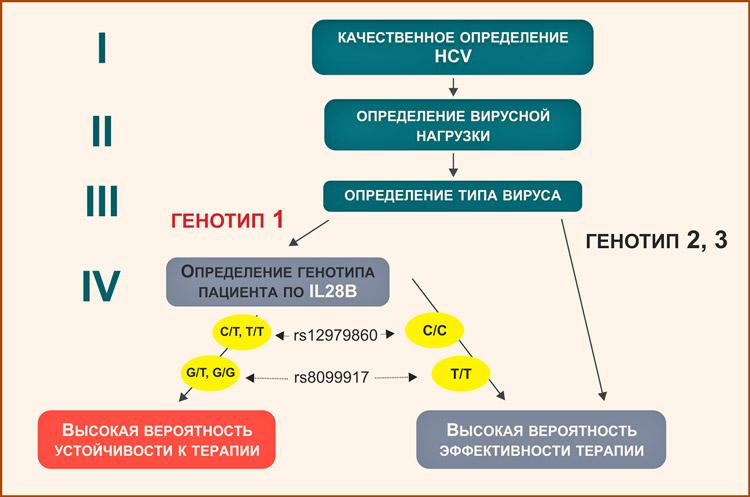 Генотип вируса С