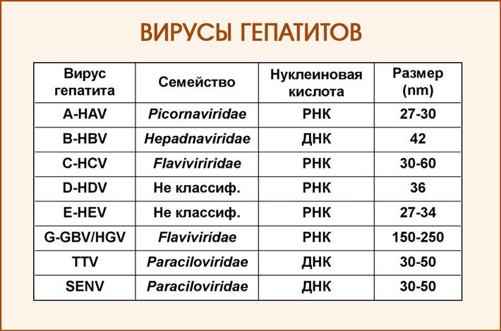 Виды вирусов гепатитов