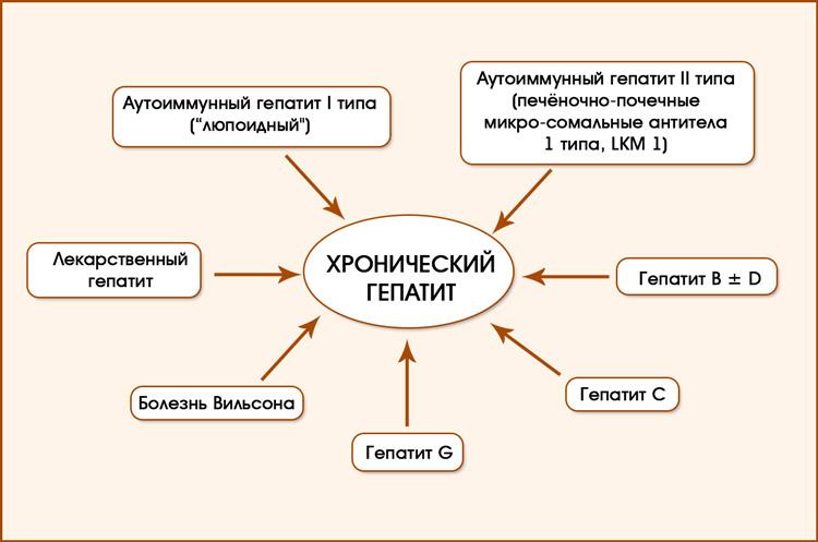 Классификация хронического гепатита