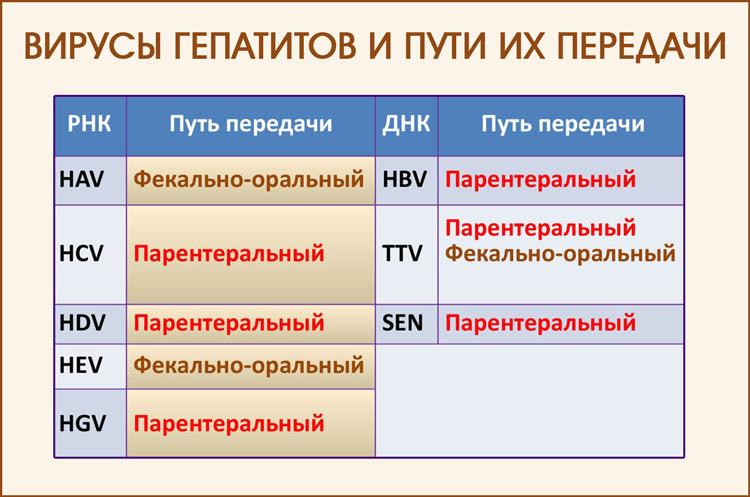 Пути передачи вирусов гепатитов