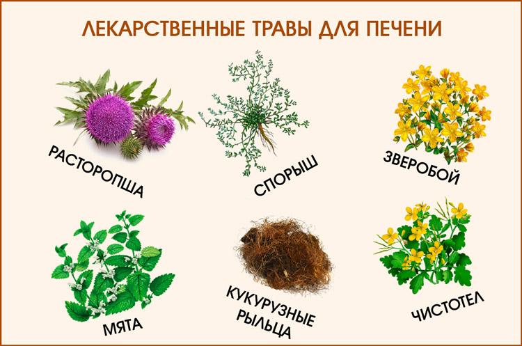 Травы для печени гепатит с thumbnail